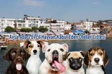 Avşa Adası Evcil Hayvan Kabul Eden Oteller Listesi